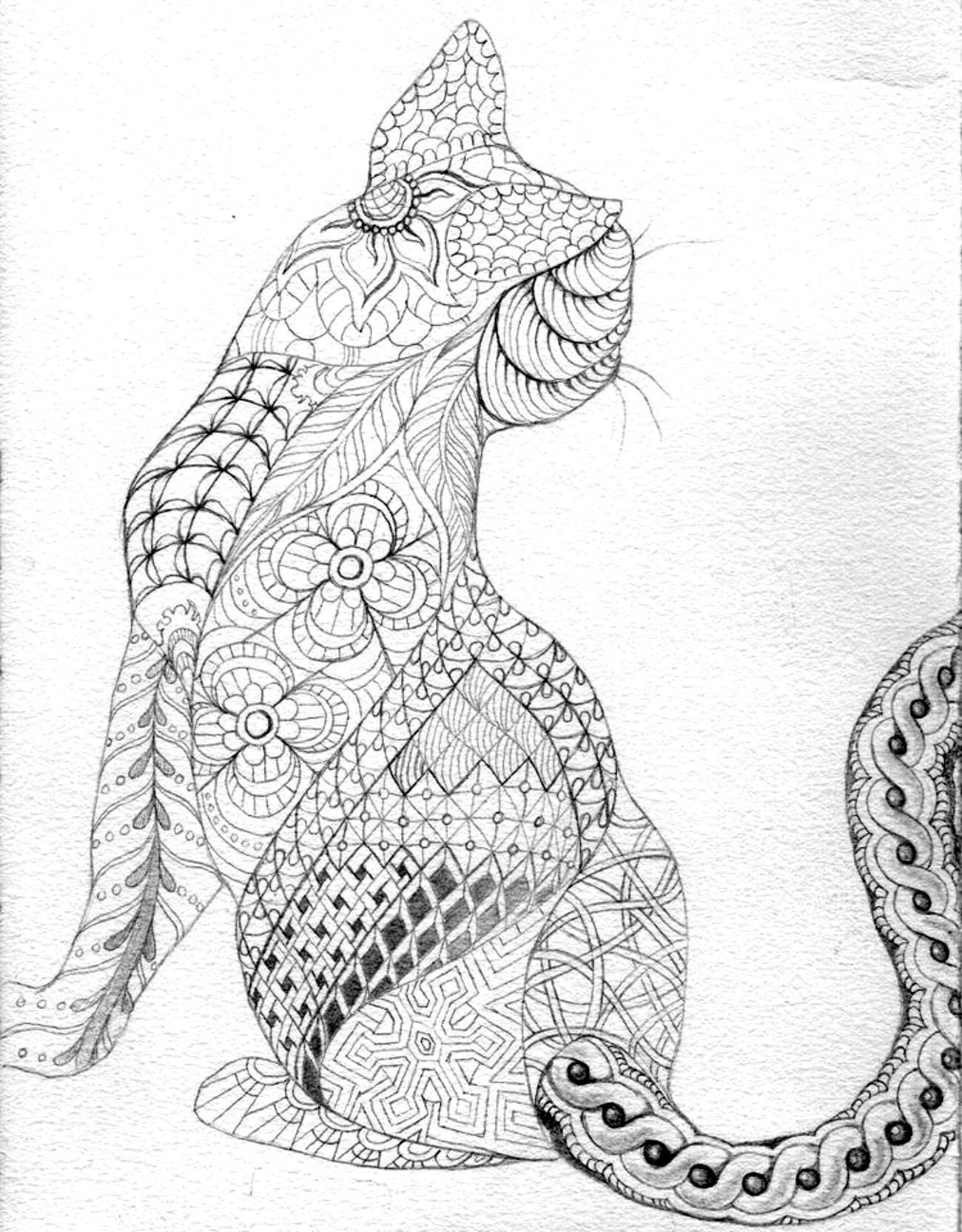 Coloring Page Cat The