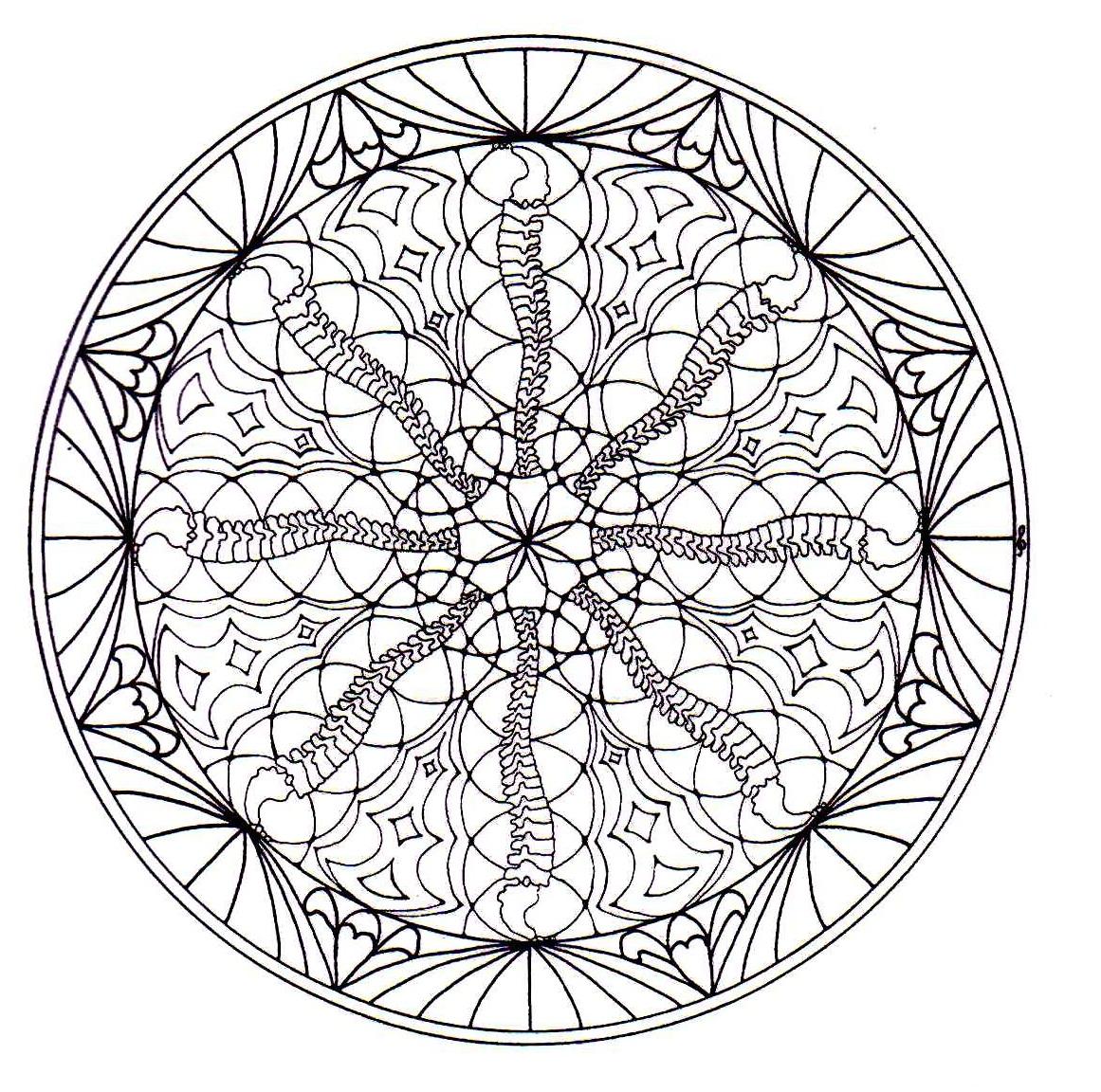 Magnificient Natural Mandala Drawing